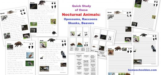 Nocturnal Animal Quick Study - Opossums Raccoons Skunks Beavers