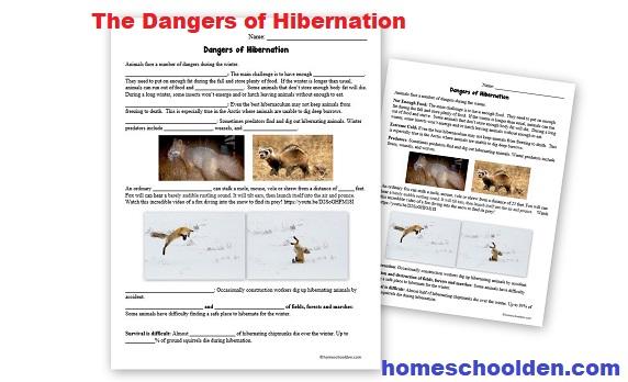 The Dangers of Hibernation - Worksheet