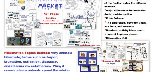 Winter Packet - Earth's Axis, Seasons, Arctic Antarctica, Polar Animals Hibernation and more