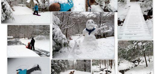 Snow Much Fun - Jan 2019 Snowfall!