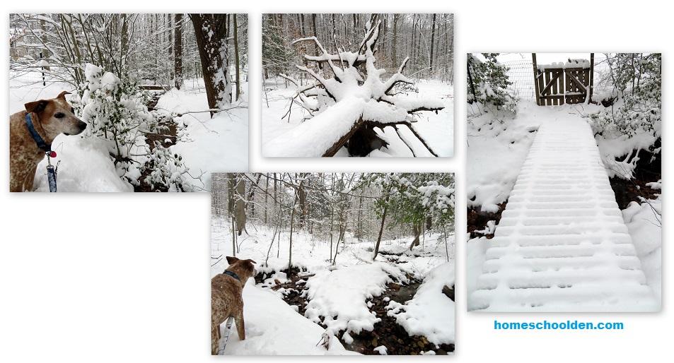 Walk in the Woods - Snowfall