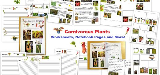 Carnivorous Plants Worksheets Notebook Pages Lapbook and More!