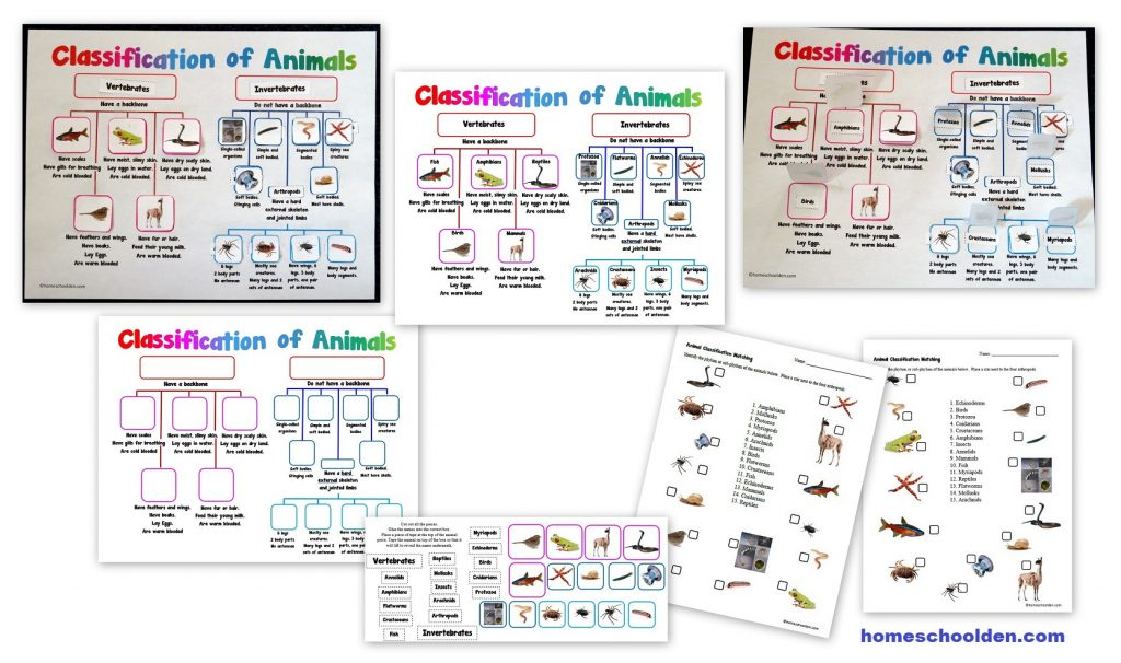 Classification of Animals Activity and Worksheets - Vertebrates-Invertebrates
