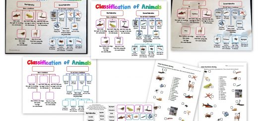 Classification of Animals Activity and Worksheets - Vertebrates-Invertebrates