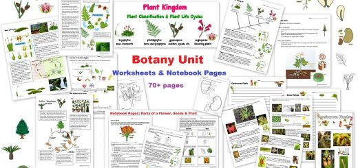 Botany Unit - Worksheets and Notebook Pages - Plant Kingdom Moss Ferns conifers angiosperms