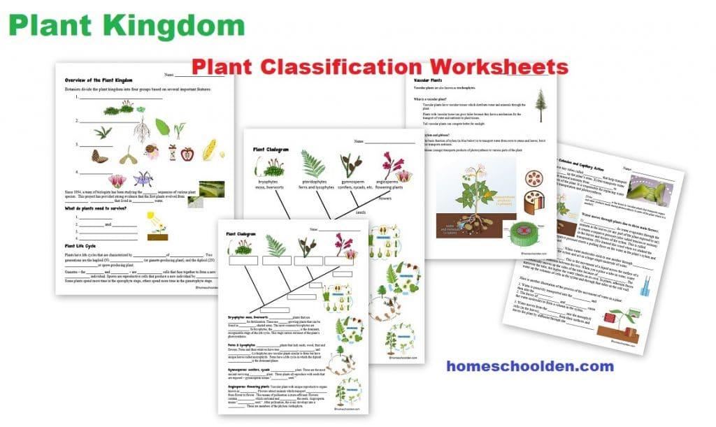 Botany Unit - Plant Kingdom Worksheets And More