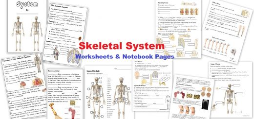 Skeletal System Worksheets and Notebook Pages