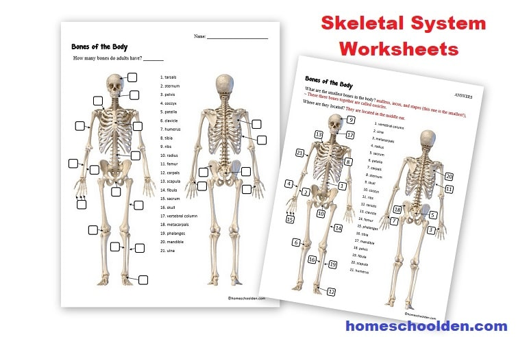 It is a picture of Printable Skeletal System with grade 4
