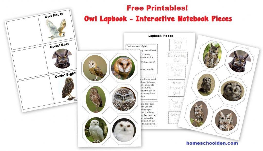 Free Owl Lapbook