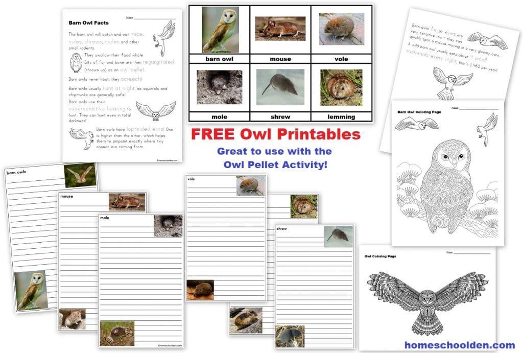Owl Pellet Activity - Free Printables