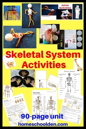 Skeletal System Activities - Bones Joints Cartilage
