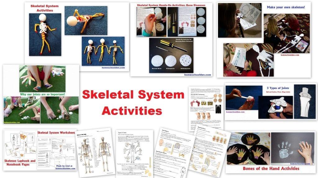 Skeletal System Activities Bones Joints Cartilage