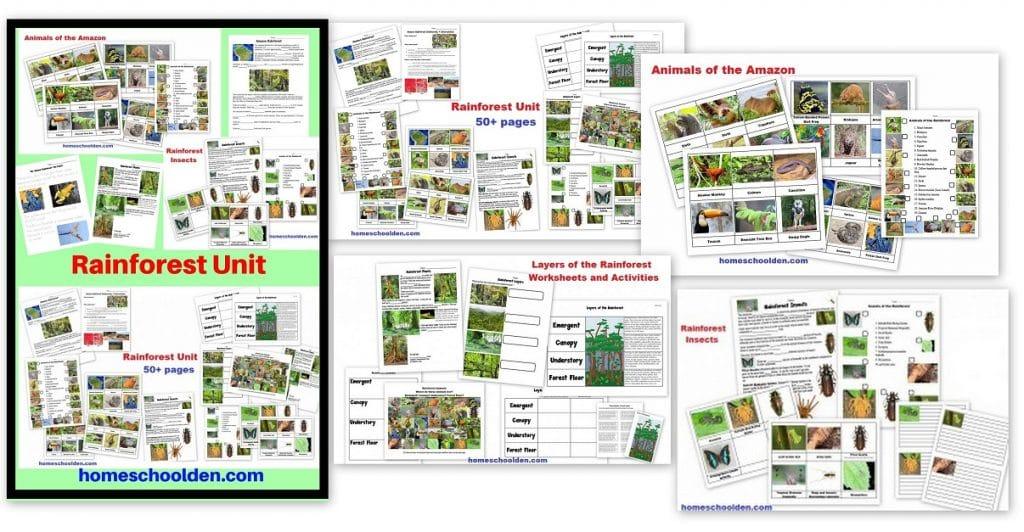 Rainforest Unit - Animals of the Rainforest Layers of the Rainforest