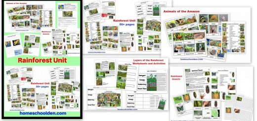 Rainforest Unit - Animals of the Rainforest Layers of the Rainforest