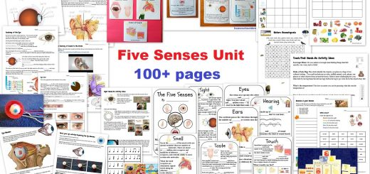 Five Senses Unit - sight hearing touch smell touch - Worksheets and Activities