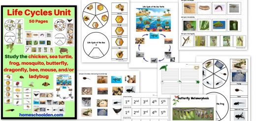 Life Cycles Unit - Chicken Sea Turtle Frog Mosquito Butterfly Dragonfly and More