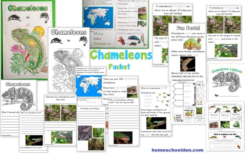 Chameleons Packet