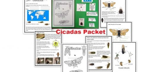Cicadas worksheet Packet and lapbook