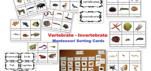 Vertebrate - invertebrate Montessori Cards
