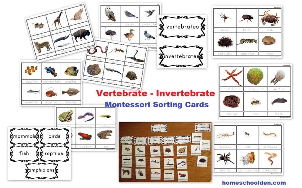 Vertebrate - invertebrate Montessori Cards