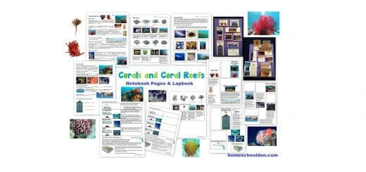 Coral Reef Worksheets - Interactive Notebook Page Activity