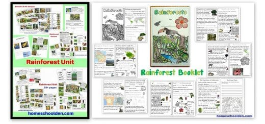 Rainforest Worksheets - Booklet - Notebook Pages