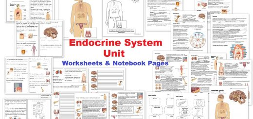 Endocrine System Unit - Worksheets Notebook Pages and activities