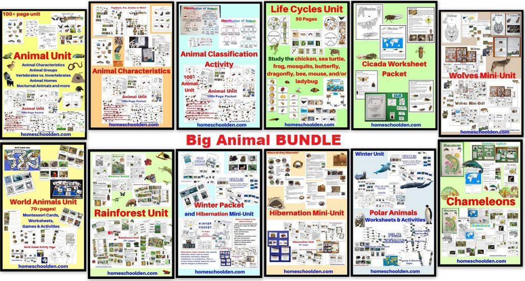 Big Animal BUNDLE - includes 8 pdfs