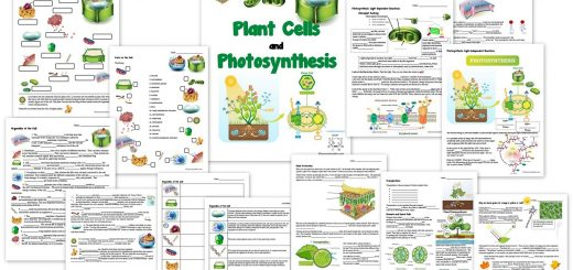 Plant Cell and Photosynthesis Worksheets