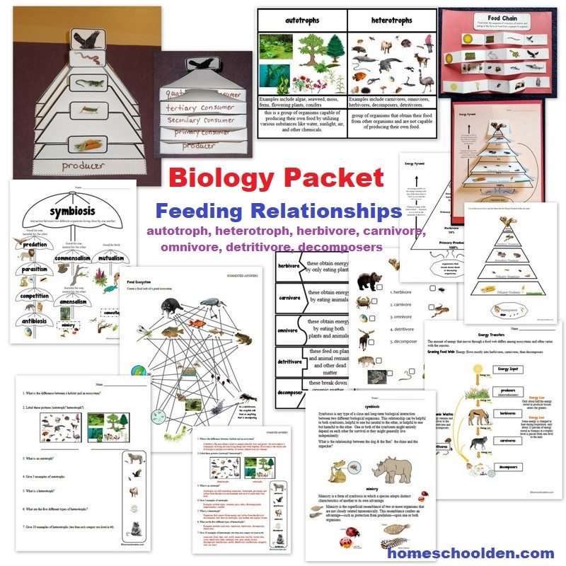 Biology Packet - Feeding Relationships