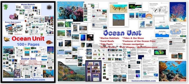 Ocean Unit - Marine Habitats Coral Reefs Tide Pools Tides Features of the Ocean Floor Fish Shapes and more worksheets