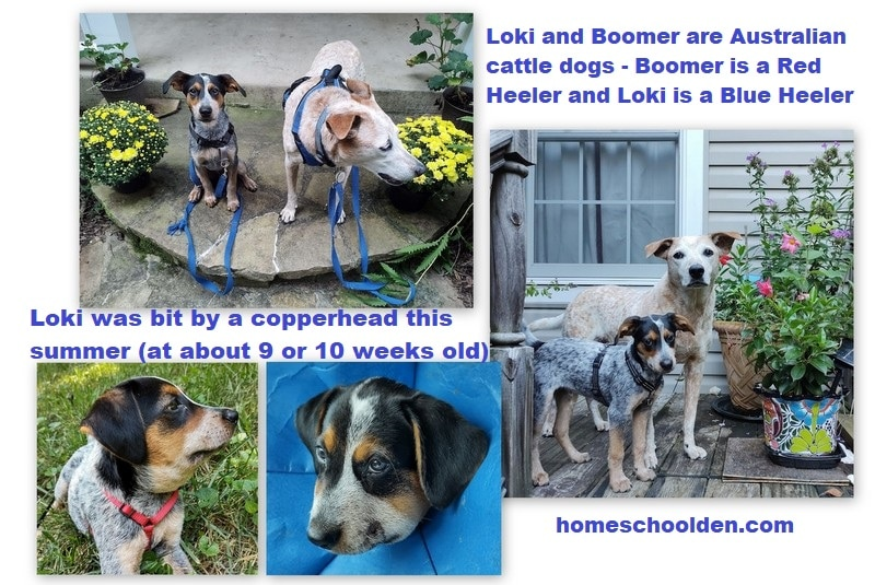 Loki and Boomer